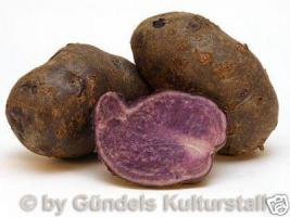 Kartoffeln Historisch