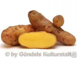 Foto 2 Kartoffeln Historisch