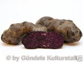 Foto 3 Kartoffeln Historisch