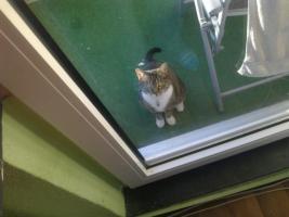 Foto 5 Katze