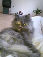 Foto 3 Katze