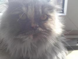 Foto 4 Katze