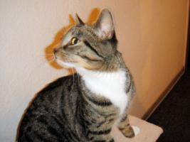 Foto 2 Katze 5 Monate
