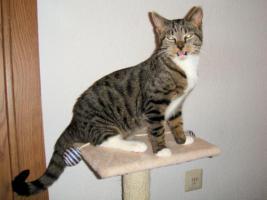 Foto 3 Katze 5 Monate