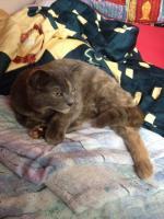 Katze in 67240 Bobenheim-Roxheim zugelaufen/gefunden