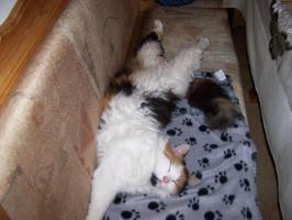 Foto 2 Katze Entlaufen