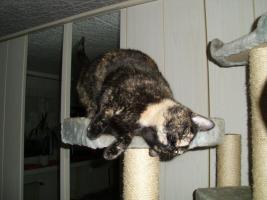 Foto 4 Katze Lilly