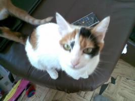 Katze Minzi