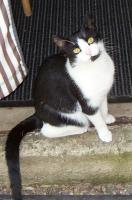 Katze Tränchen vermisst!