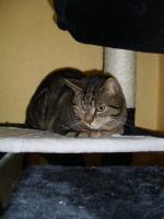 Katze Tweety