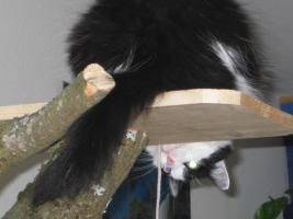 Katze sucht dringend Einzelplatz
