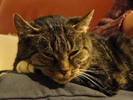Katze sucht liebevolles Zuhause mit Freigang