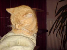 Katze sucht liebevolles zuhause