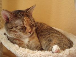 Katze sucht neuen Dosenöffner