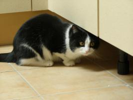 Foto 2 Katze zu verschenken