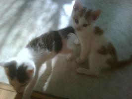 Katze weiß-rot, weiß-schwarz, schwarz weiß