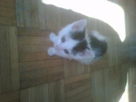 Foto 2 Katze weiß-rot, weiß-schwarz, schwarz weiß