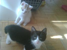 Foto 3 Katze weiß-rot, weiß-schwarz, schwarz weiß