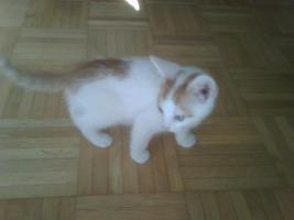 Foto 4 Katze weiß-rot, weiß-schwarz, schwarz weiß