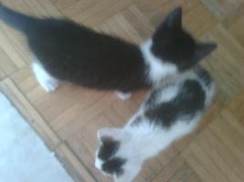 Foto 5 Katze weiß-rot, weiß-schwarz, schwarz weiß