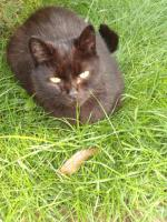 Foto 5 Katze & Karter zu verschenken