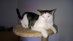 Katze / Kater   3 Jahre alt