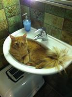 Katze + Zubeh�r
