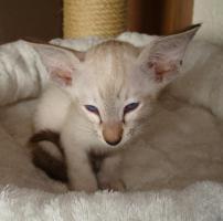 Foto 2 Katzen