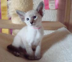 Foto 4 Katzen