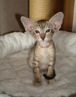 Foto 7 Katzen