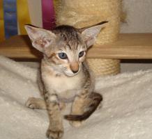 Foto 8 Katzen