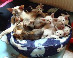 Foto 9 Katzen