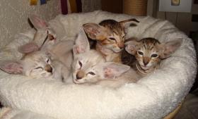 Foto 11 Katzen