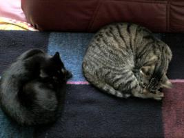 Katzen-Geschwister-Pärchen