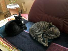 Foto 2 Katzen-Geschwister-Pärchen