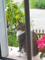 katzendame fl�ckchen-wartet auf den Katzen-Service
