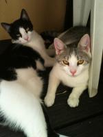 Katzen abzugeben Allergiebedingt!!!