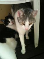 Foto 2 Katzen abzugeben Allergiebedingt!!!
