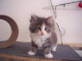 Foto 2 Katzen babys