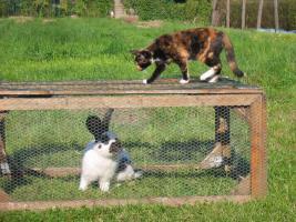 Foto 3 Katzen würden Mäuse kaufen oder Futter von REICO