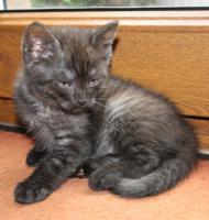 Foto 4 Katzenbabies abzugeben