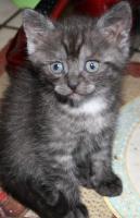 Foto 6 Katzenbabies abzugeben