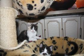 Foto 7 Katzenbabies abzugeben