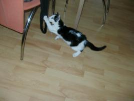 Foto 2 Katzenbaby