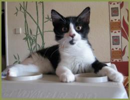 Katzenbaby Vitaly, 16 Wochen, Langhaarmix, männlich