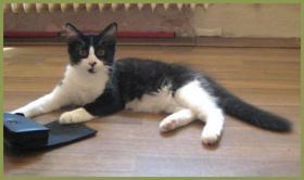 Foto 2 Katzenbaby Vitaly, 16 Wochen, Langhaarmix, männlich