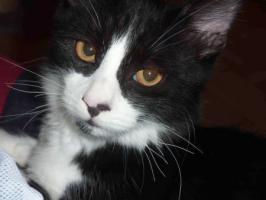 Foto 3 Katzenbaby Vitaly, 16 Wochen, Langhaarmix, männlich