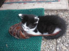 Katzenbaby sucht liebe Dosenöffner