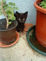 Katzenbaby zu verschenken