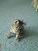 Foto 5 Katzenbabys